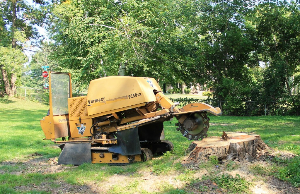 big-stump-grinding-sharp-tree-service-removal